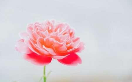 Flower blog 2
